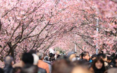 La primavera, una estación de cambios